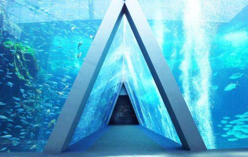 """""""命""""を扱う水族館アクアマリンふくしまが行う震災伝承 「被災した水族館という認識はずっと続いている」 − インタビュー"""